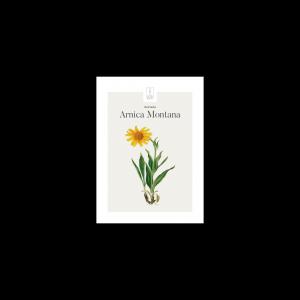 Kunstplakat Arnica Montana / Guldblomme 13x18