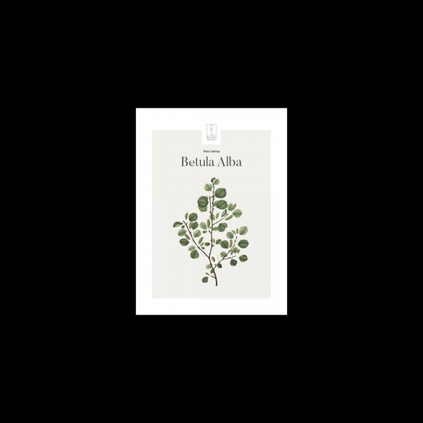 Kunstplakat Betula Alba 13x18