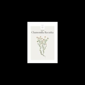 Kunstplakat Chamomilla Recutita13x18