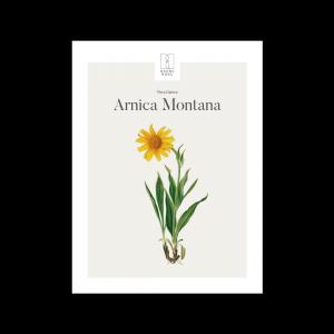 Kunstplakat Arnica Montana / Guldblomme 30x40