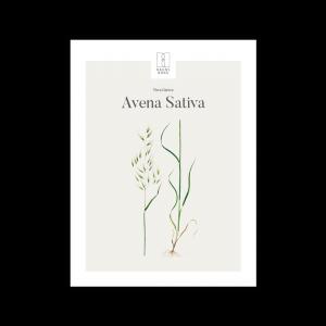 Kunstplakat Avena Sativa 30x40
