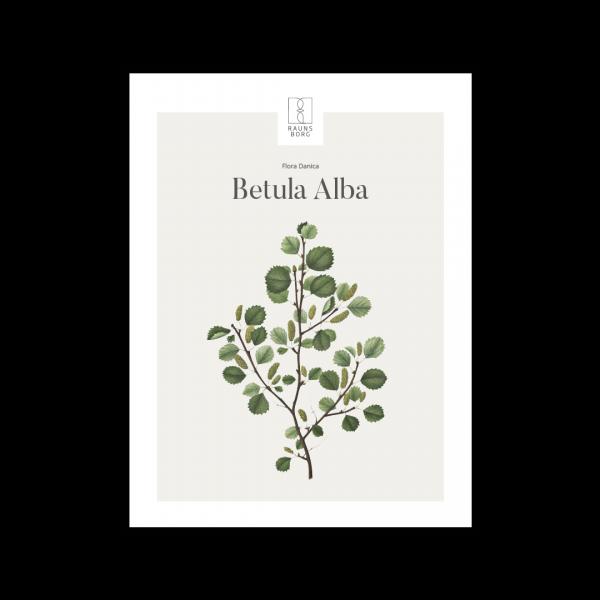 Kunstplakat Betula Alba 30x40