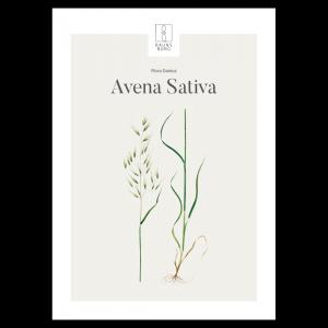Kunstplakat Avena Sativa 50x70