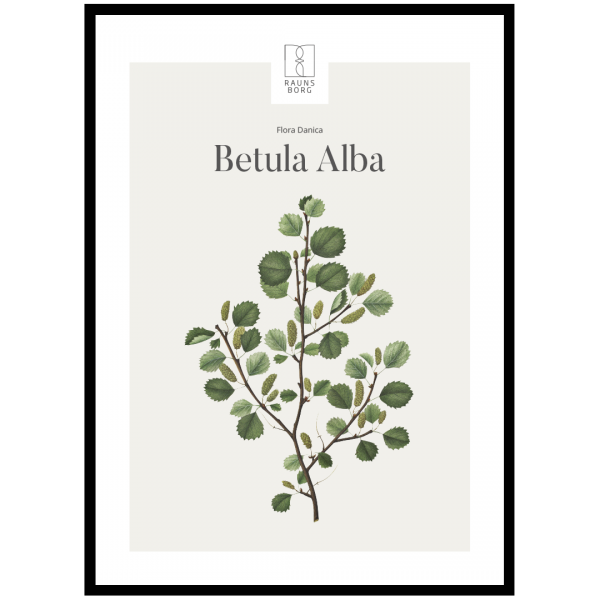 Kunstplakat Betula Alba 50x70